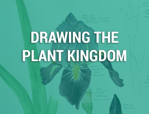 Linnea LortsherDrawing the Plant Kingdom